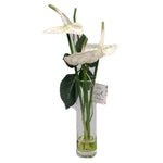 Cream Anthurium in Tall Vase - Jodhshop