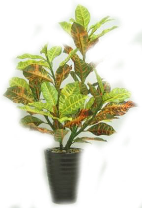 Croton Artificial Plant in Ceramic Pot - 21 inches tall - Jodhpuri Online