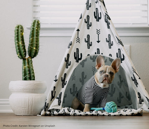 clarity cove pets blanket fort