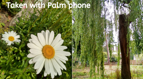 The Palm phone images
