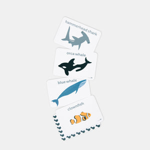 The inside view showing examples of the flash cards in the seal life set by Two Little Ducklings. The examples are a hammerhead shark, orca whale, blue whale and clownfish.