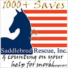 Load image into Gallery viewer, See Horse Adoption And Rescues American