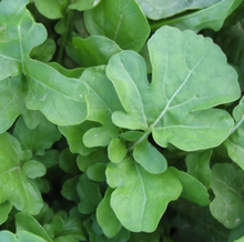 Load image into Gallery viewer, Arugula | Hudson Valley Seed Co. - InRugCo Studio & Gift Shop