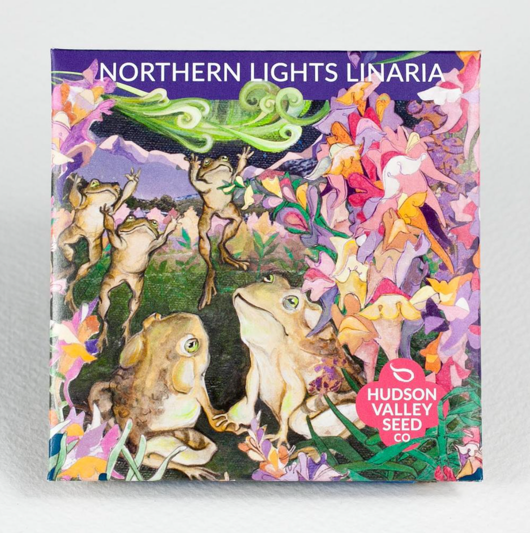 Northern Lights Linaria | Hudson Valley Seed Co. - InRugCo Studio & Gift Shop