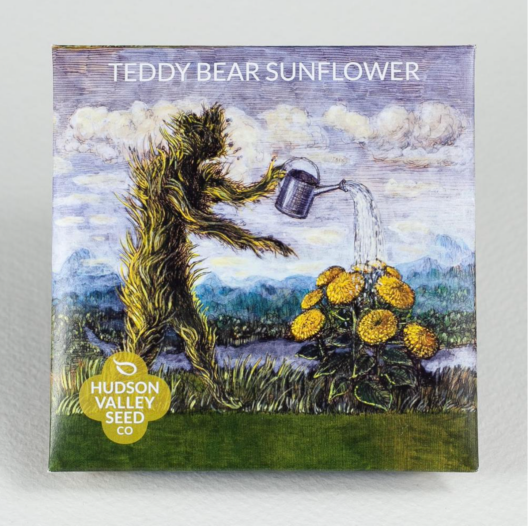 Teddy Bear Sunflower | Hudson Valley Seed Co. - InRugCo Studio & Gift Shop