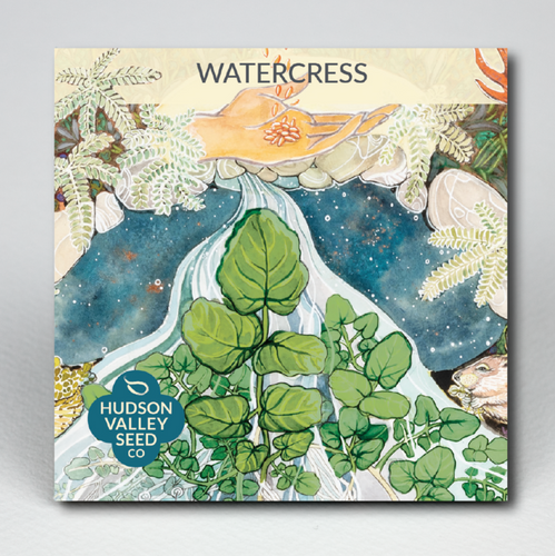 Watercress | Hudson Valley Seed Co. - InRugCo Studio & Gift Shop