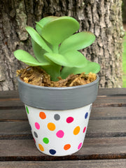 This is the mini succulent with gray rim and polka dot pot.