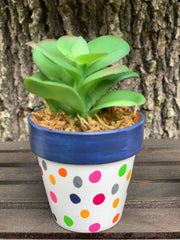 This is the mini succulent with a navy rim and polka dot pot.