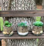 Mini Succulents shows a picture of all three succulent varieties.
