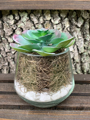 This is the multicolored mini succulent with white rock and tan moss.