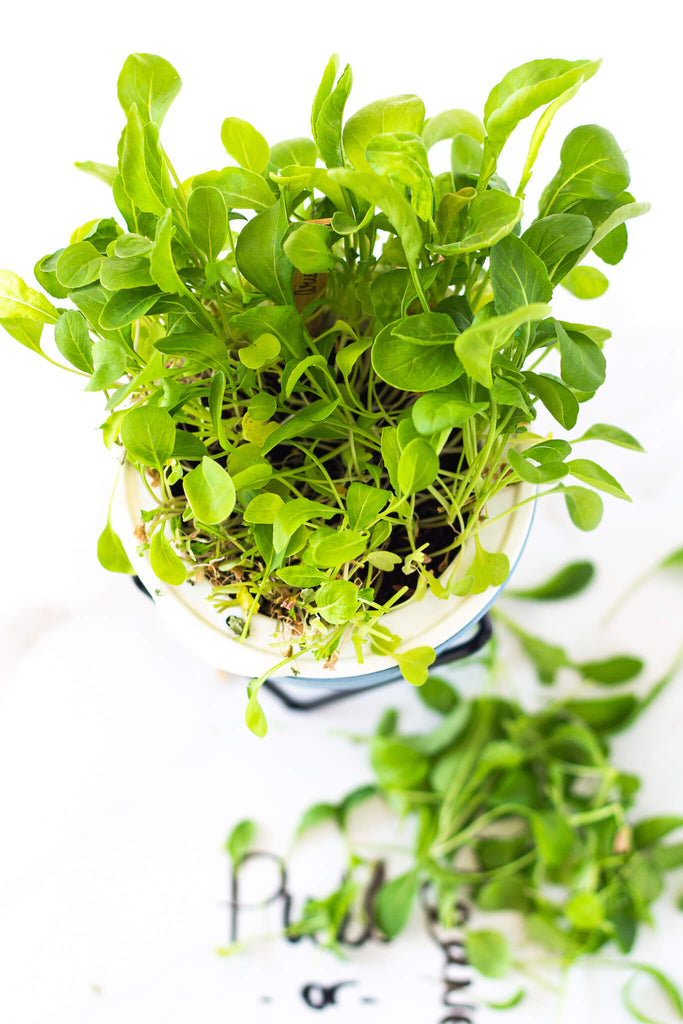 one third harvest rule arugula with ecoplanter