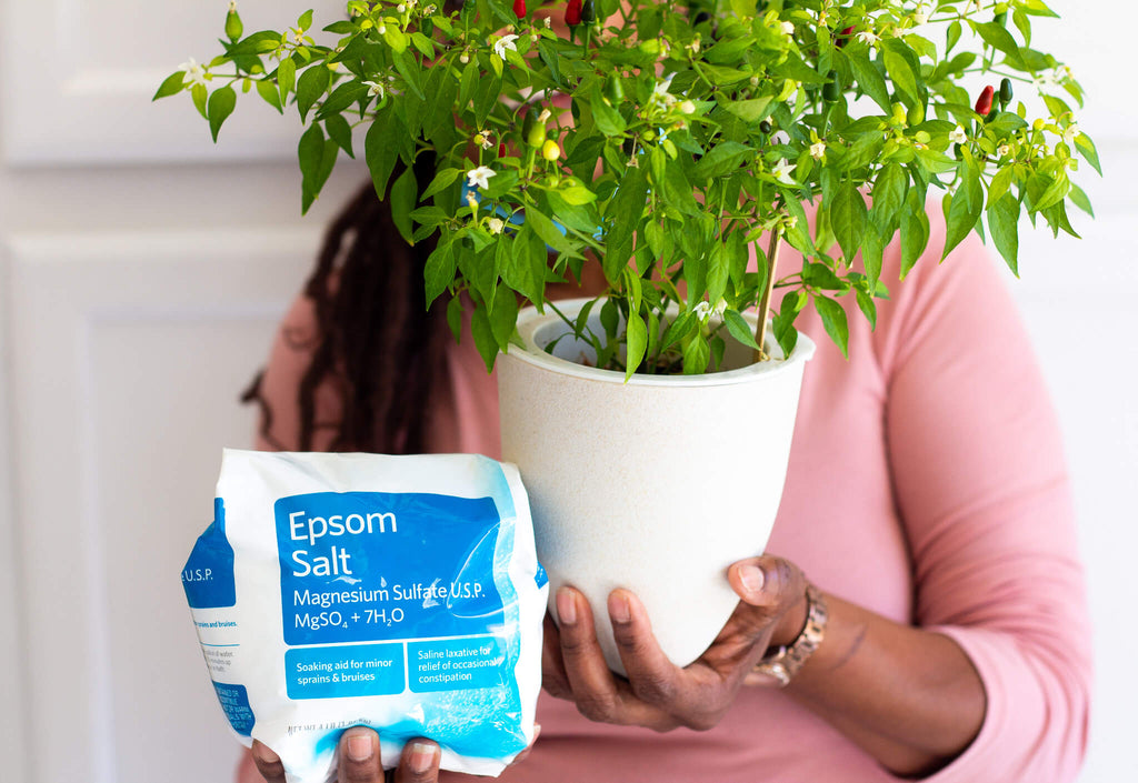 Epsom Salt and container pepper plant