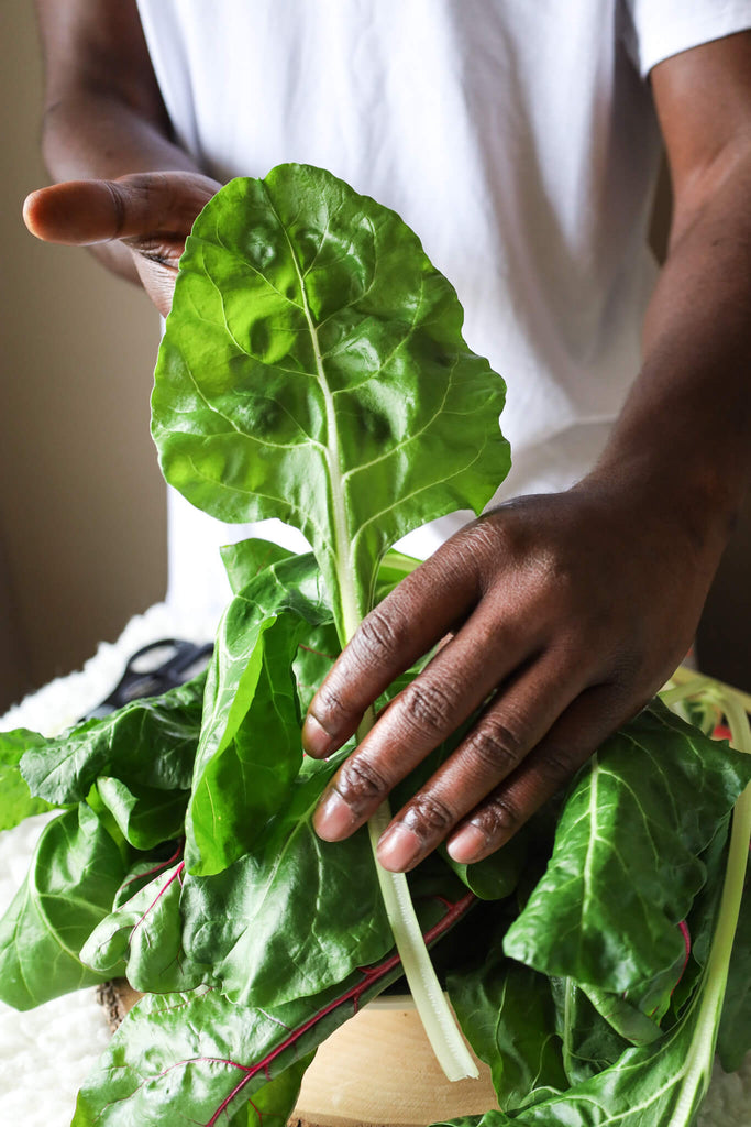 Man holding home grown swiss chard in hands