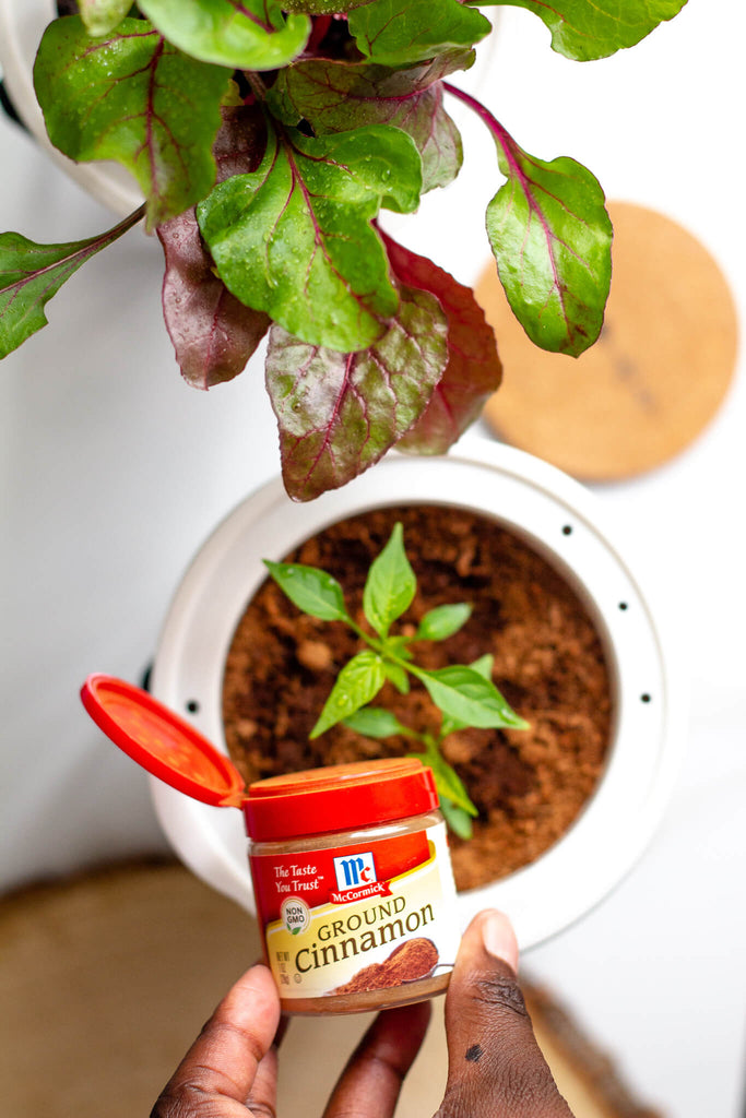 cinnamon for controlling mold and fungus in houseplants