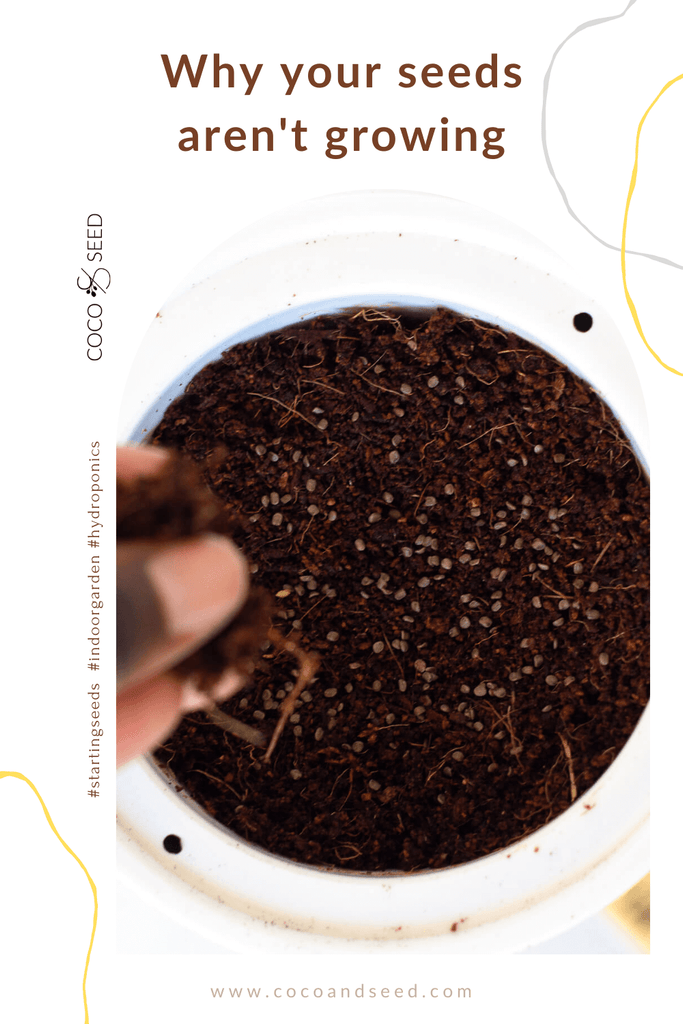 troubleshooting starting seeds in container garden