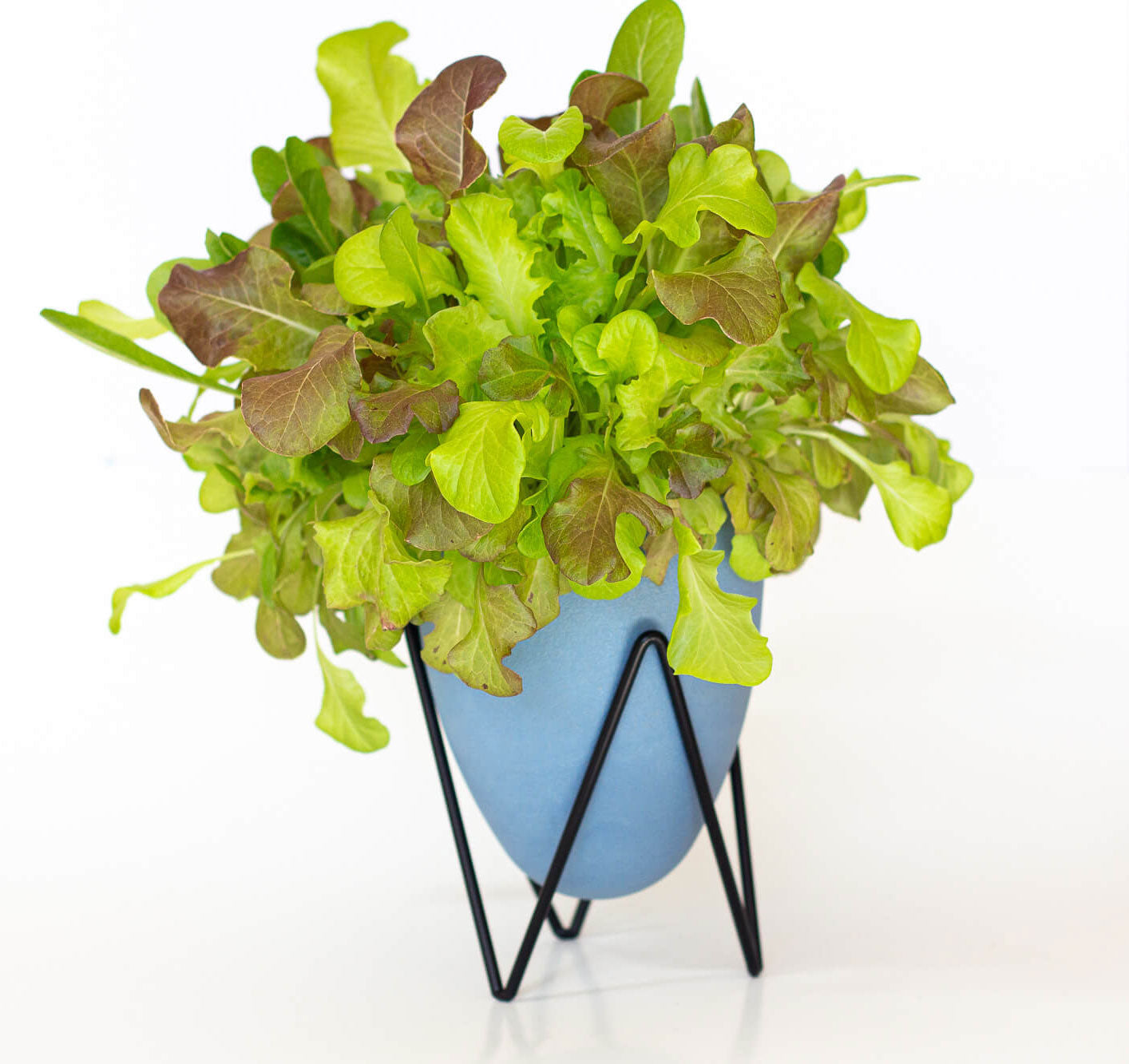 Lettuce Self Watering Planter Indoor Herb Garden Kit Hydroponic EcoPlanter System