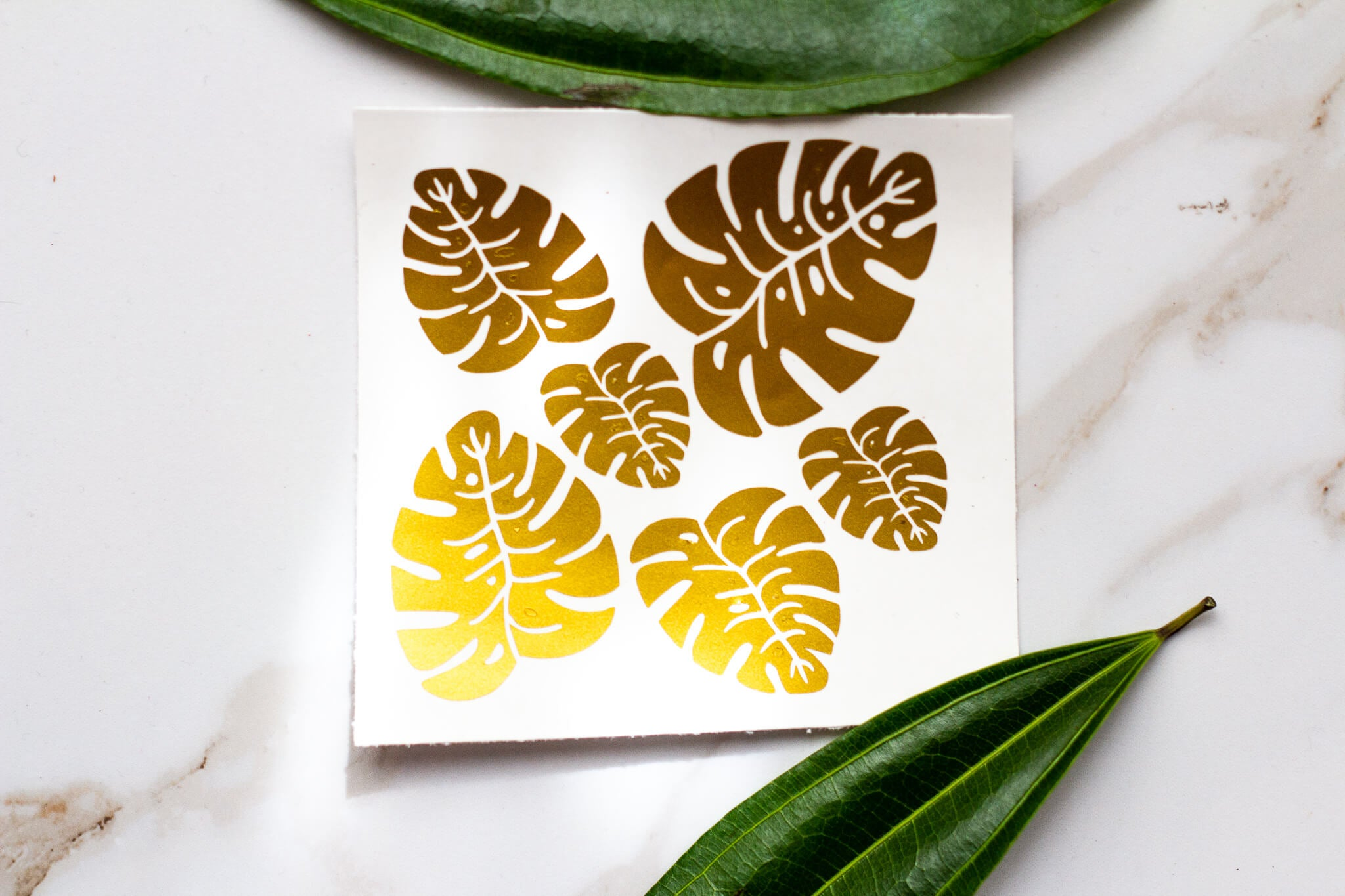 Monstera Vinyl Decal Waterproof Sticker Pack