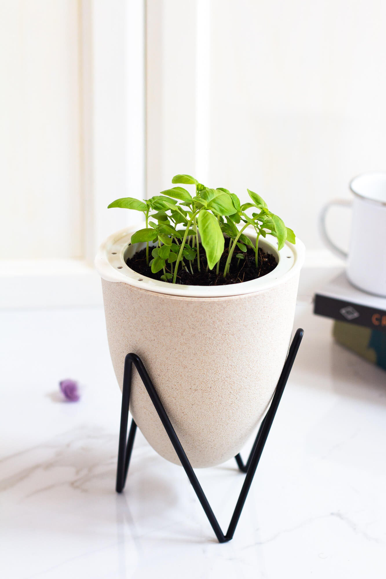 House of Aster Basil Self Watering Planter Indoor Herb Garden Kit Hydroponic System Beige