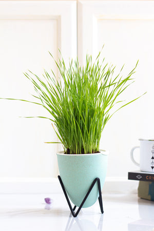 Wheatgrass Hydroponic Indoor Self-Watering Garden Kit Coco and Seed