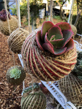 Load image into Gallery viewer, Cecelia Azhderian Workshop Succulent Kokedama