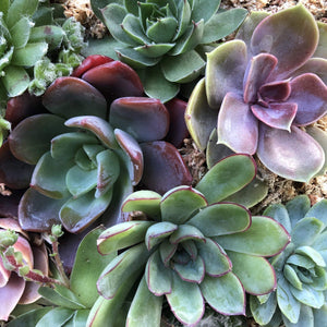 Margot Robison Workshop Vertical Succulent Gardens