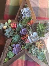 Load image into Gallery viewer, Margot Robison Workshop Vertical Succulent Gardens