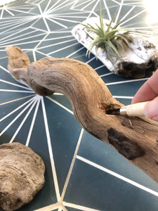 Stephanie Rapisardo Workshop Driftwood Decor