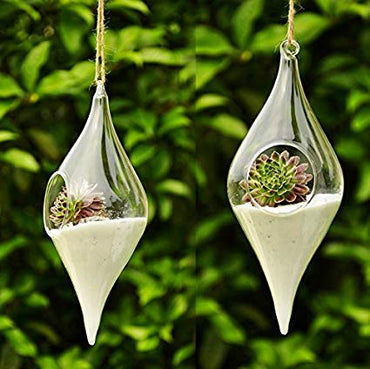 Hanging Olive Shape Glass Terrarrium Pair