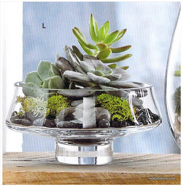 Low Footed Terrarium