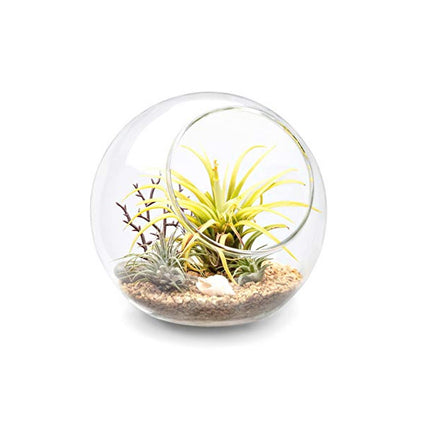 Globe Shape Glass Terrarium