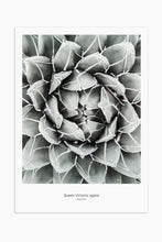 Art Print Photography - Queen Victoria Agave