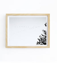 Art Print - Bird Migration