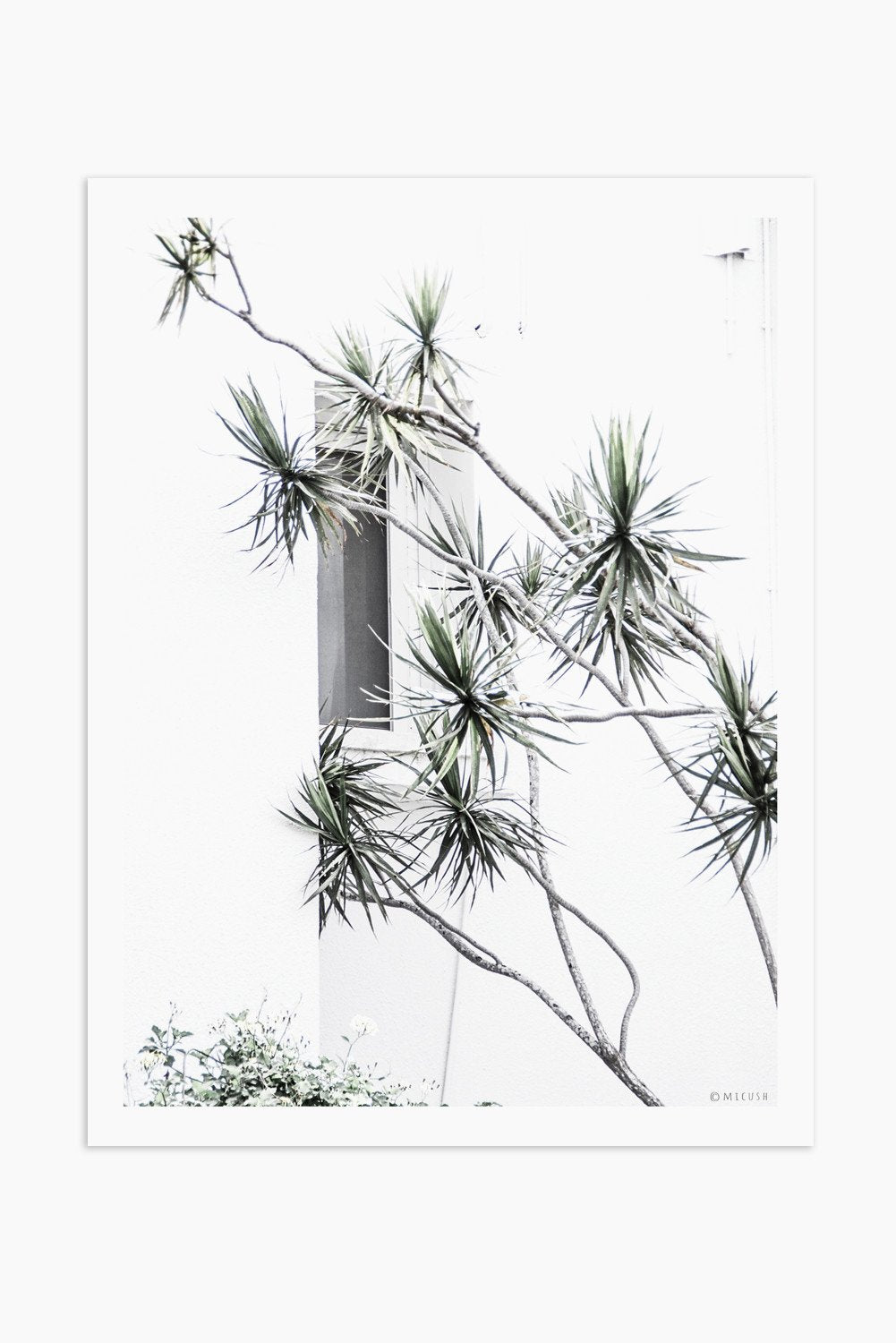 Art Print Photography - Dracaena Marginata