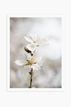 Art Print Photography - Prunus dulcet No.2