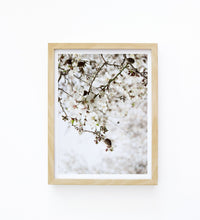 Art Print Photography - Prunus dulcet No.1
