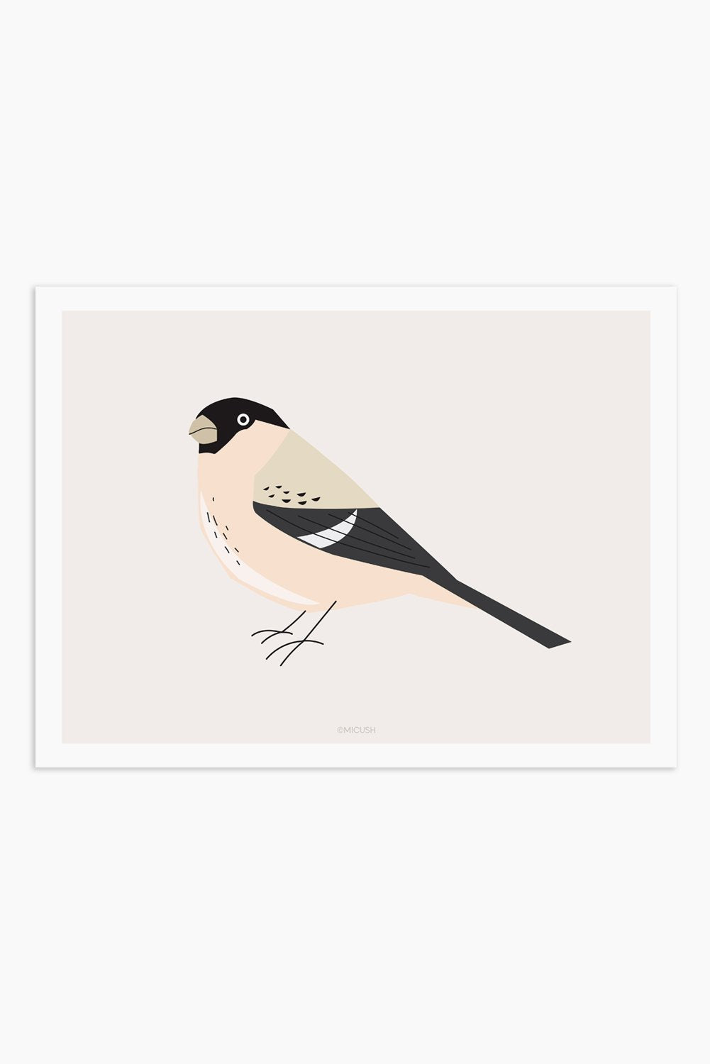 Art Print - Bird - Pyrrhula