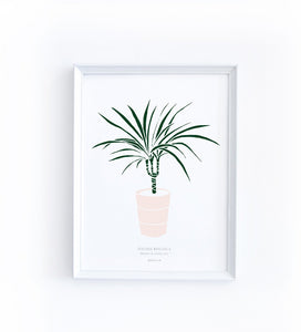 Art Print - Small Dracaena marginata