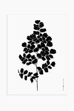 Art Print - Southern Maidenhair Fern