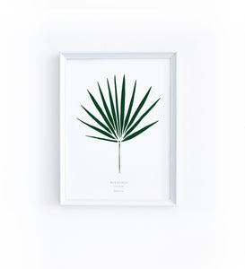 Art Print - Washingtonia Leaf