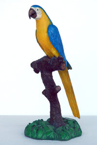 Blue & Gold Macaw Blue & Yellow Parrot