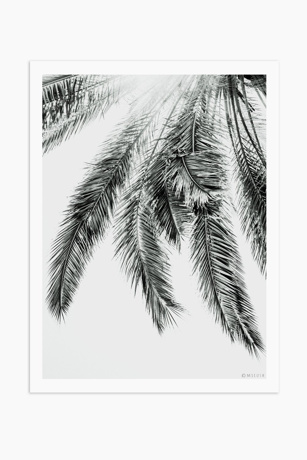 Art Print Photography - Palm No.2