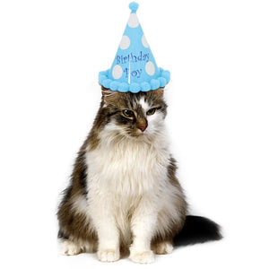 Small Dog or Cat 'Birthday  Boy' Cone Hat