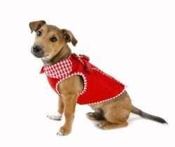 Rouge Harness Dog Coat with Gingham Trim