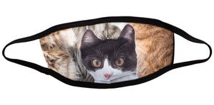 Black Trim Cat Face Mask - 3 Pack