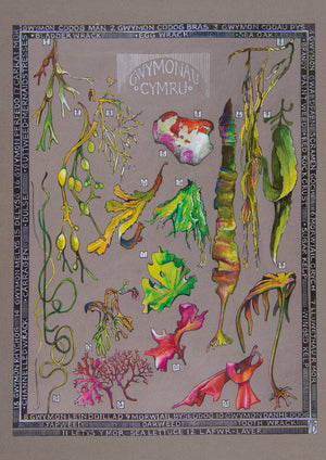 Ffion Gwyn - Heritage Tea Towel Collection - Seaweed / Gwymonau