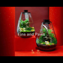 Load image into Gallery viewer, [Terra] Terrarium complete with LED Light
