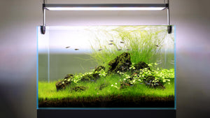[Twinstar] Light II 600EA Adjustable Planted Aquarium LED Light