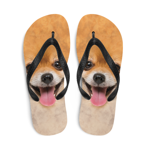 Pomeranian Dog Flip-Flops by Design Express
