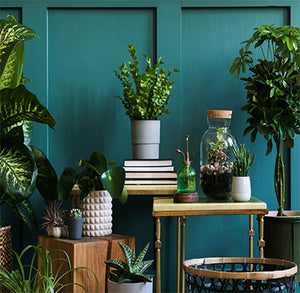 Discover Your Wild – Benefits of Indoor Plants