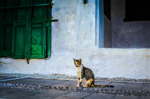 Martin Wacker • GREEK CAT